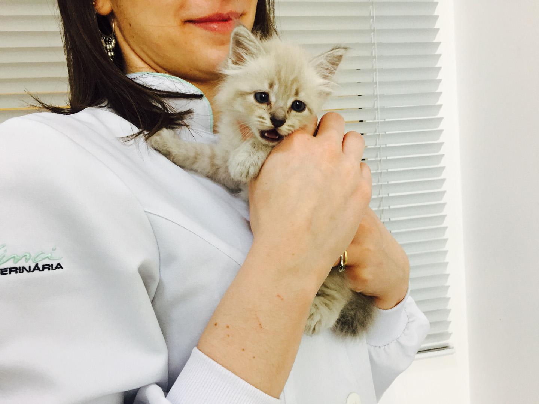 Misty e toda sua fofura iniciou seu protocolo de vacinas